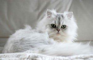 5 Home Remedies for Hairballs