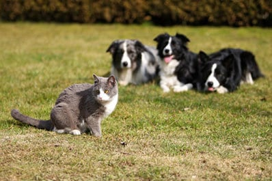 dogs-and-cat