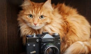 cat photos