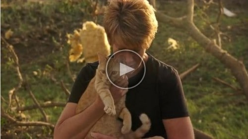 During an interview with ABC News, this cat emerged from the rubble left after twin tornados destroyed a home in northeast Nebraska.