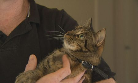 Tilly the Tabby saved the Day! This courageous feline saved her family from a house fire. Courtesy 7News.