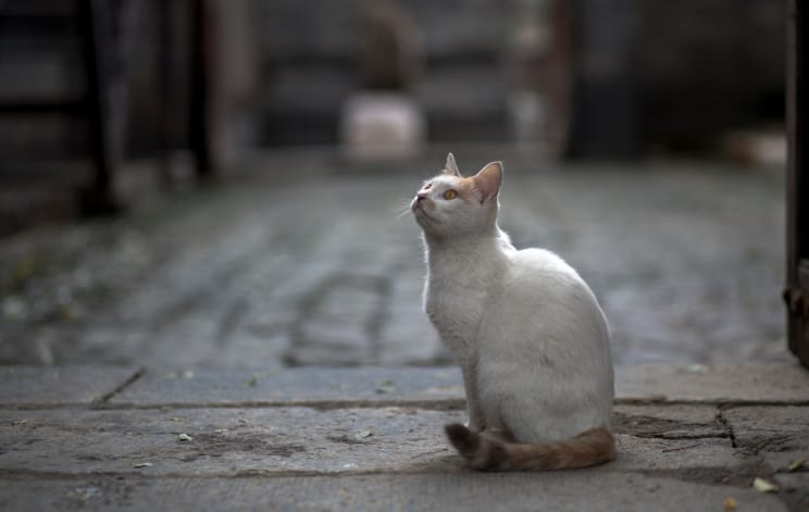 white cat looking upward