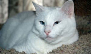 Moe is the most recent victim of the Houston cat killer. Photo by Chris and Kimberly Elliott