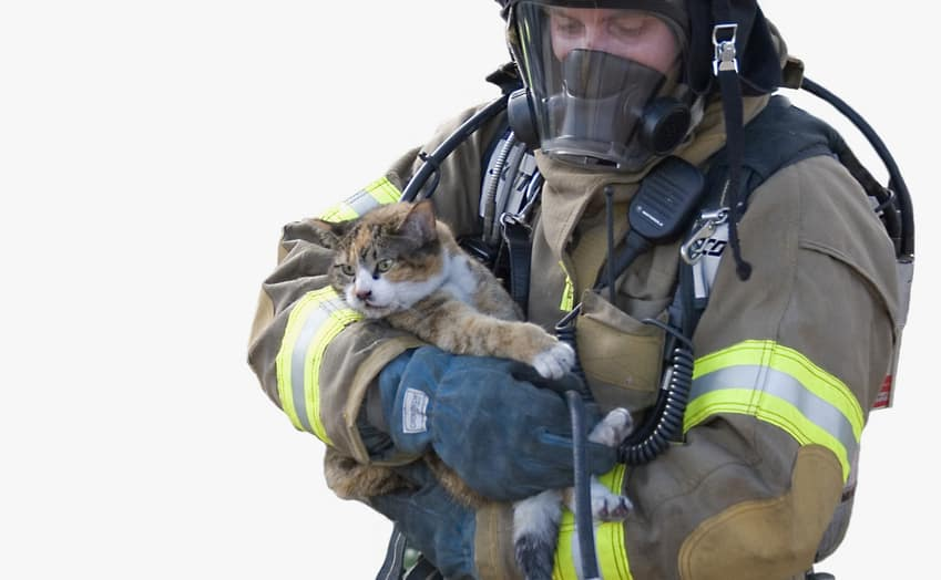 cat-firefighter