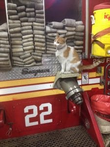 Firehouse Cat 1