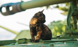 kitten sitting on a tank