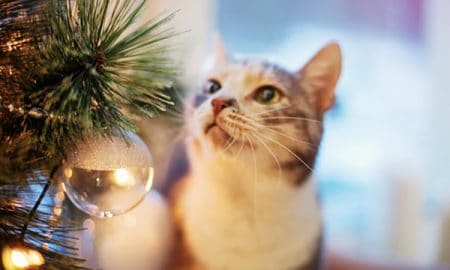 Cat near the Christmas tree with lights and toys