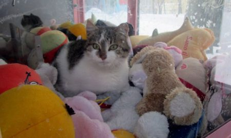 cat_hides_from_cold_in_a_vending_machine_for_stuffed_toys-1