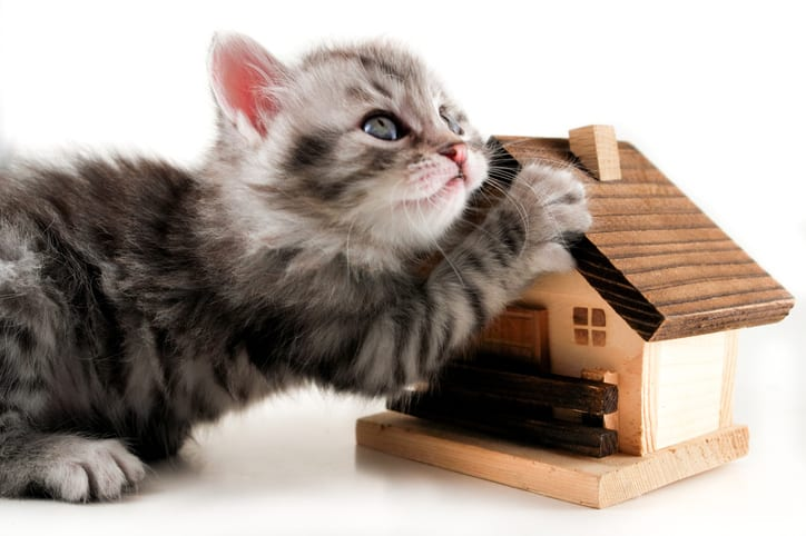 Kitten and model house