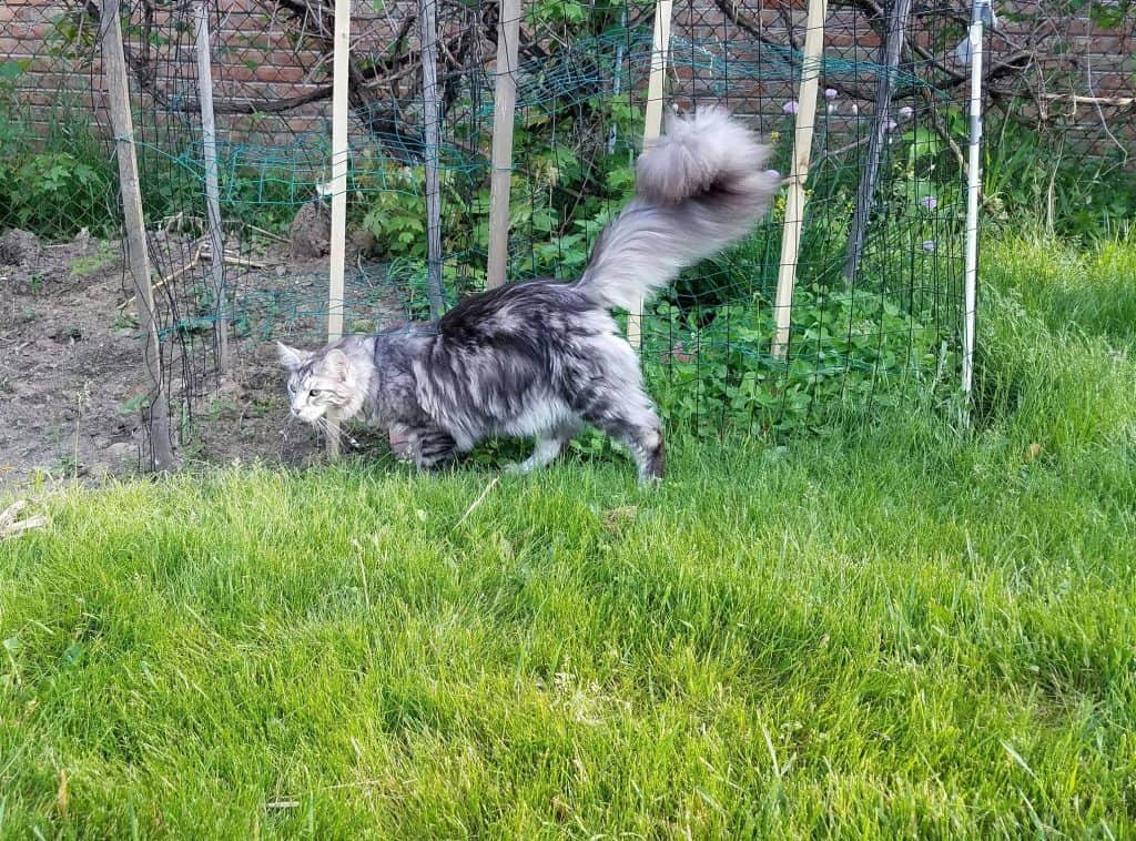 Image credit: greenboy84