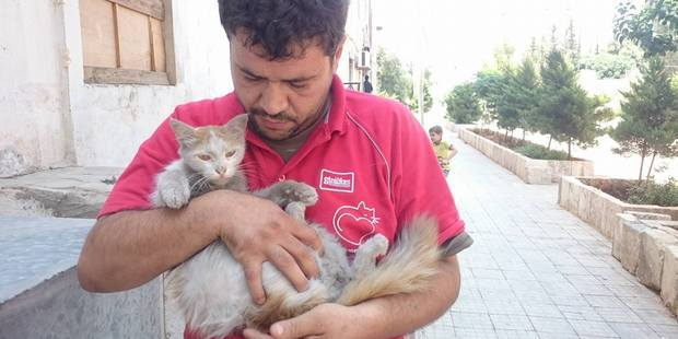 Photo / Facebook / Cats of Syria