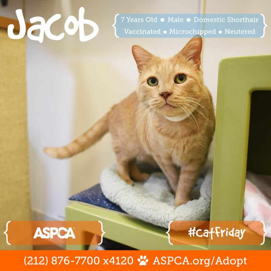 blog_cat-friday_112216_jacob