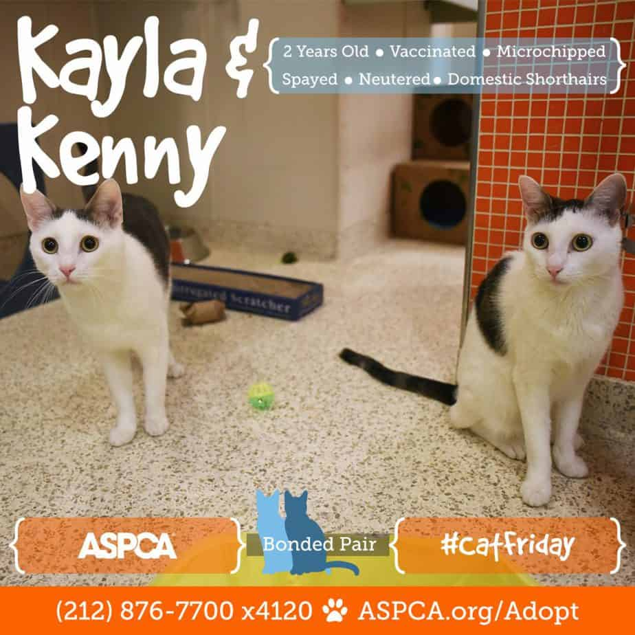 blog_cat-friday_112216_kayla-kenny