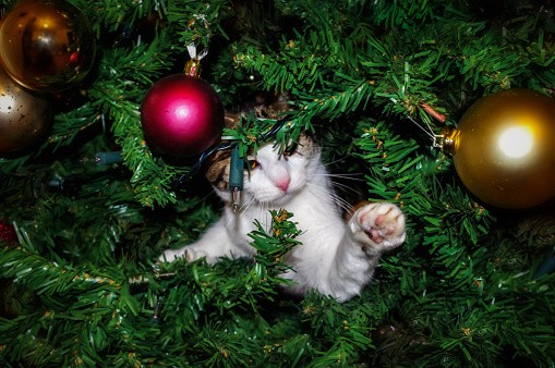 Funny cat in a Christmas Tree