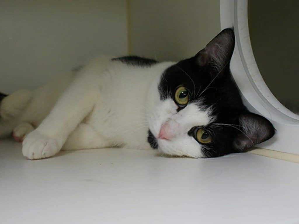 Officials ask anyone who adopted Manhattan shelter cats in the past month to call the Health Department at 866-692-3641 for care instructions. (ANIMAL CARE CENTERS OF NYC)