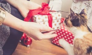 facebook-image-cat-lover-gifts