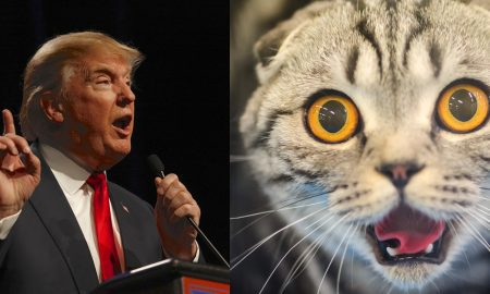 trump-and-cat