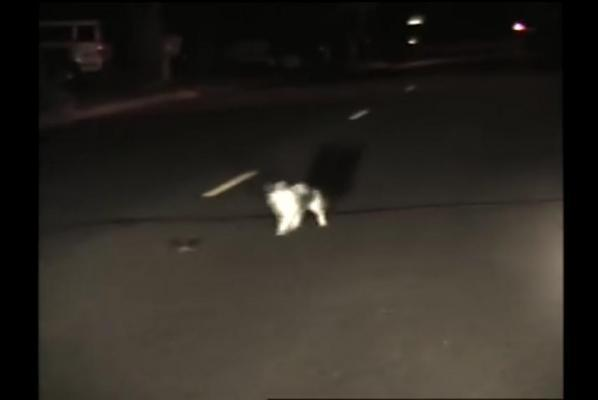 Literal-game-of-cat-and-mouse-recorded-by-police-dashcam