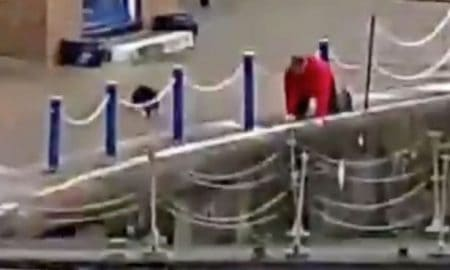 man-saves-cat-that-goes-plunging-into-water-at-the-docks-after-fight-with-another-feline