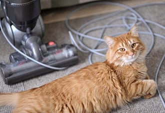 solutions for cat shedding