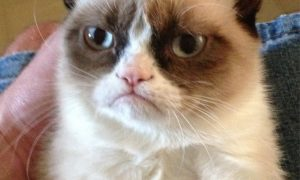 Original Grumpy Cat photo