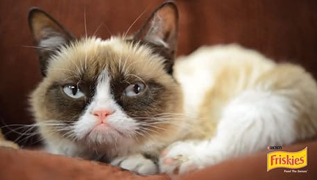 Grumpy Cat gets an Endorsement Deal