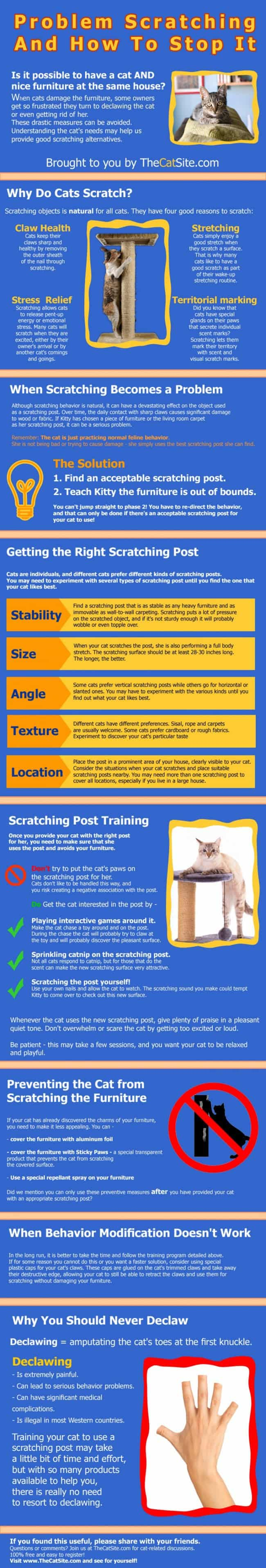 cats-problem-scratching-and-how-to-stop-it_52ca6c7f12b39_w1500