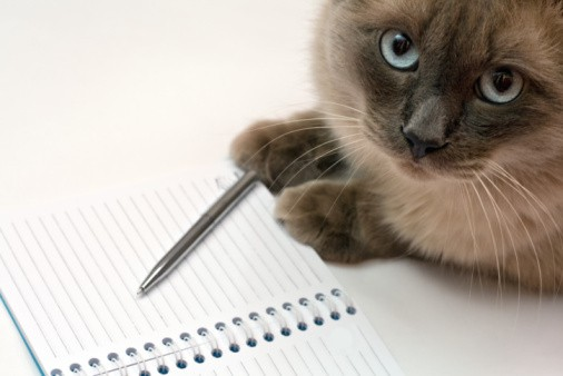 Most Popular Cat Names of 2014 Revealed - The Catington Post