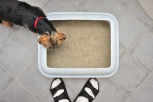 Keep the dog out of the litter box