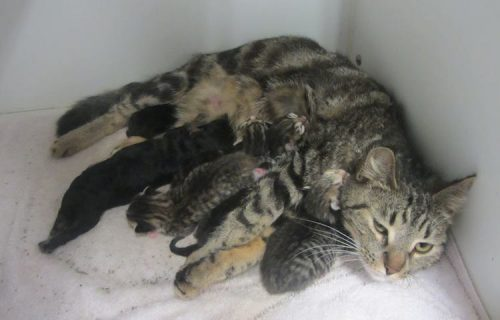 Cat-Nursing-Puppy-Cropped-City-of-Lagrange-Animal-Shelter-Facebook