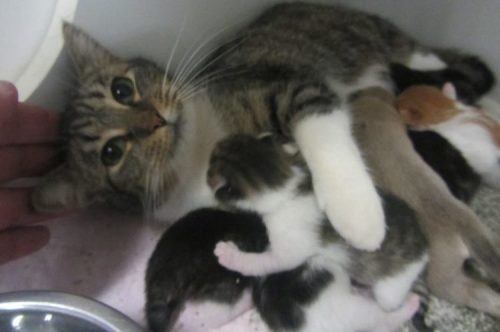 Nursing-Cat-Cropped-City-Of-Lagrange-Animal-Shelter-Facebook