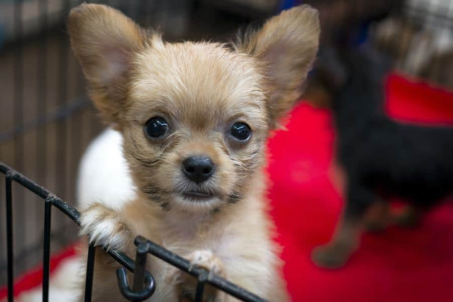 San Francisco Law Bans The Sale Of Non Rescue Cats Dogs From Pet