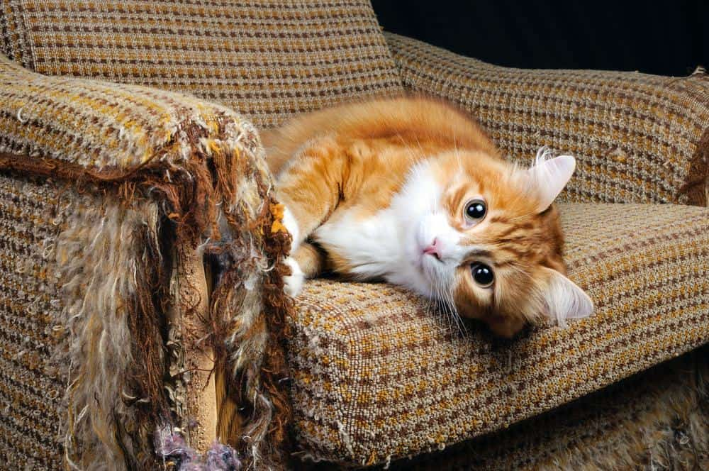 Quick Easy Ways To Repair Damage Caused By Cats