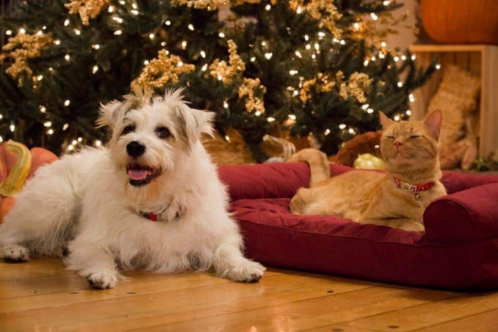 Hallmark Channel\'s Annual Thanksgiving \'Yule Log\' Now Includes a Cat ...