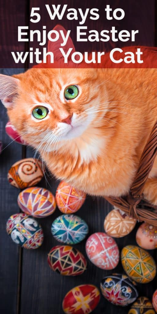 5 ways to enjoy Easter with your cat