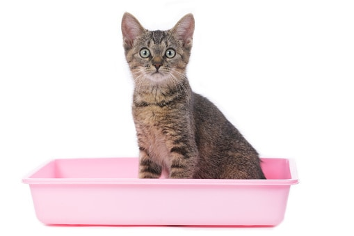 How To Combat A Cat Allergy Without Getting Rid Of Your Cat