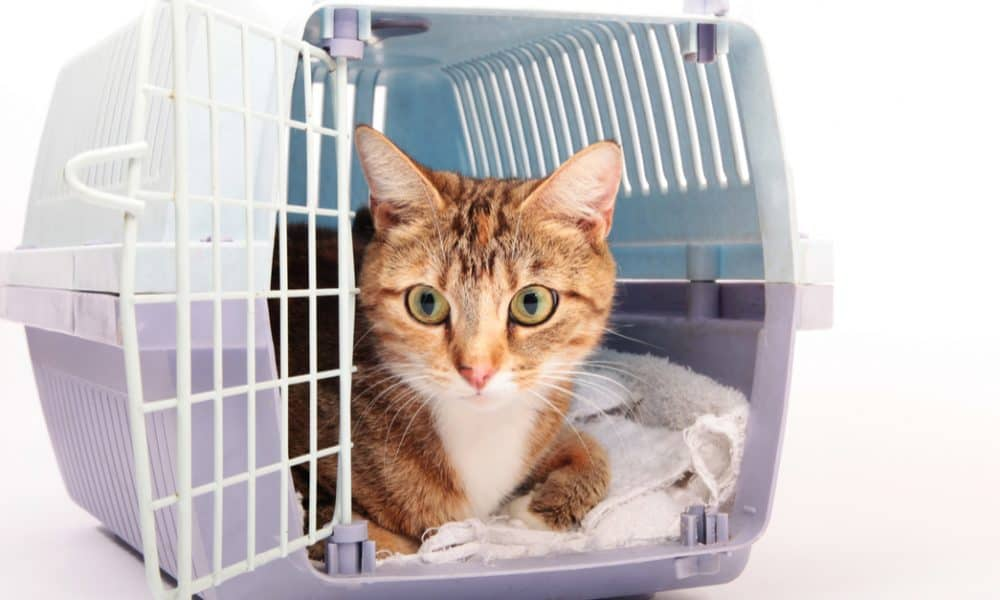 Which Is The Most Healthy And Friendly Cat Breed