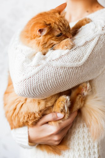 How To Remove Cat Hair From Everything The Catington Post
