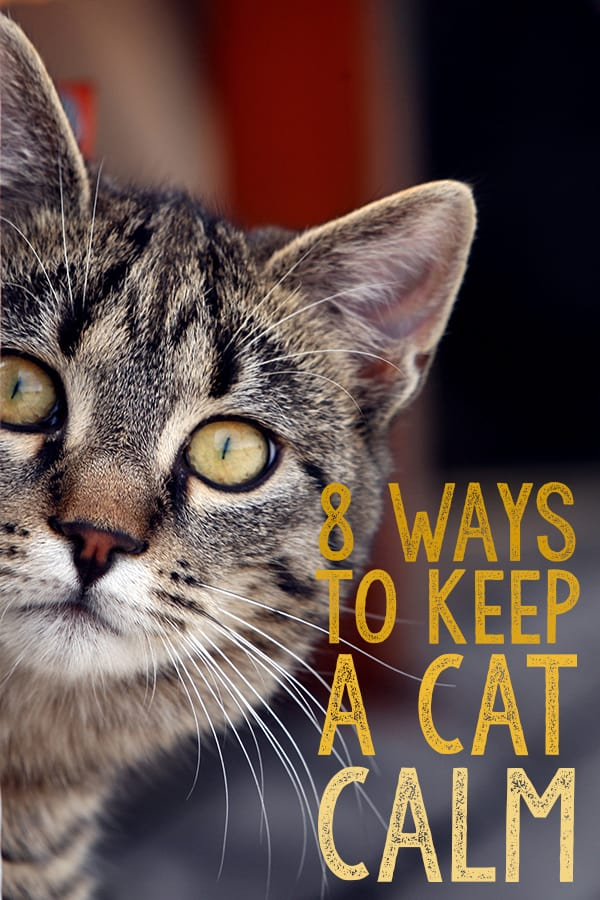 how to keep a cat calm