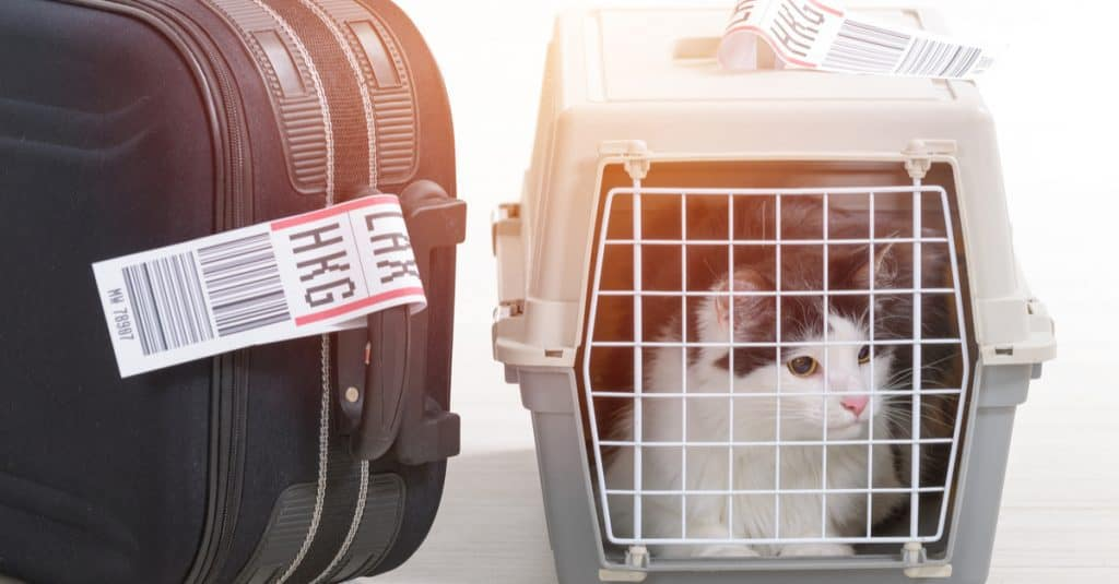 United Airlines Unveils New Pet Policy Bans More Than 40 Dog And