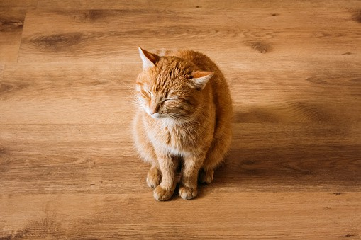 How To Clean Cat Pee From Everything The Catington Post