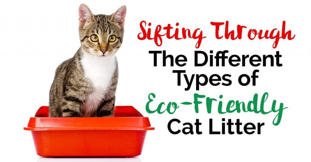 Sifting Through The Different Types of Eco-Friendly Cat Litter