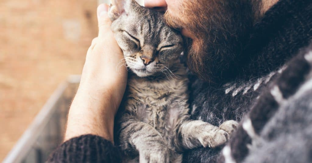 5 Items for $5 or Less That Could Save Your Pet's Life - The