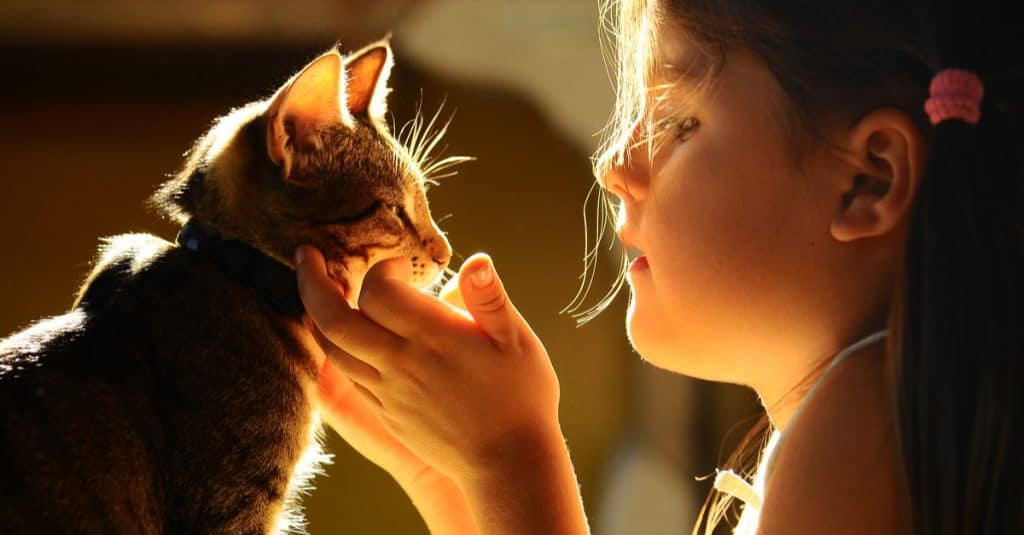 child and cat