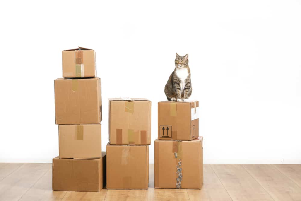 Here are some moving tips to minimize your cat's stress: