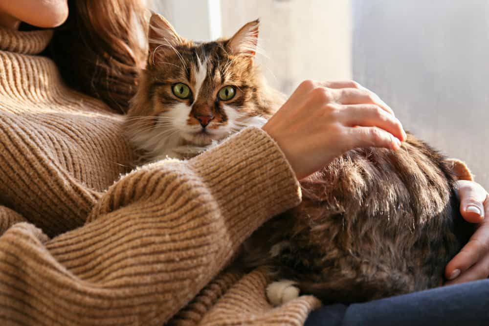 cats can help us cope with anxiety