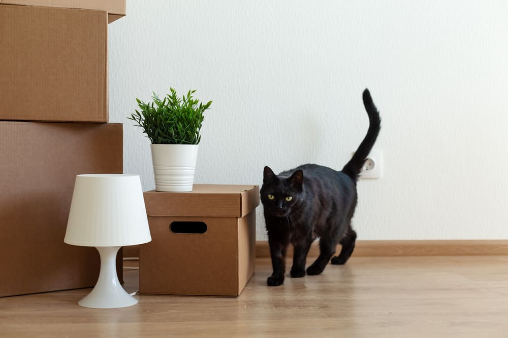 These tips will make your move easier for you and your cat.