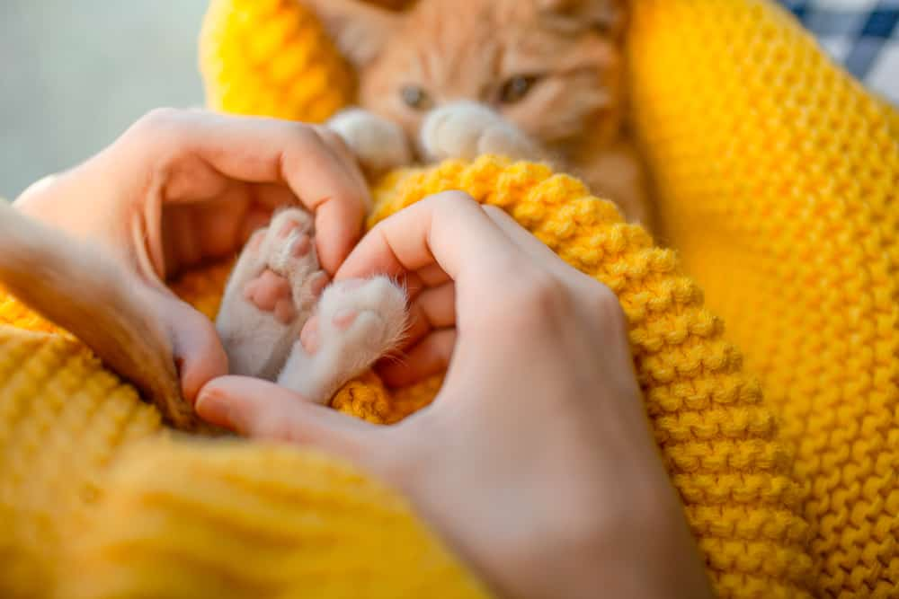 paws need claws! austin becomes the first city in texas to ban declawing cats