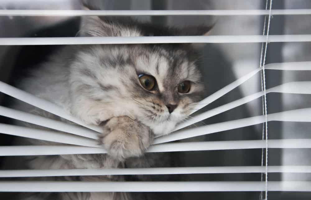 blinds for cats